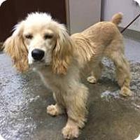 Adopt A Pet :: Atco, NJ - Tucker - New Jersey, NJ