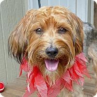 Adopt A Pet :: Sunshine - Baton Rouge, LA