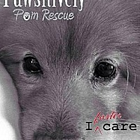 Adopt A Pet :: FOSTER HOMES NEEDED - Harrisburg, PA