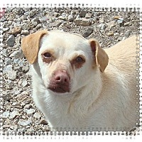 Adopt A Pet :: Dillon - Las Vegas, NV