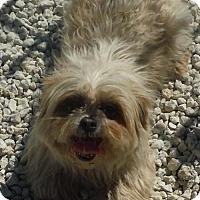 Adopt A Pet :: Gidgett - Orlando, FL