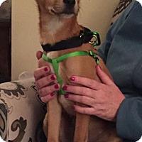 Adopt A Pet :: Finn - Boston, MA