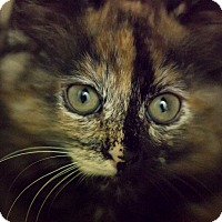 Adopt A Pet :: JINX - Houston, TX