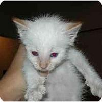 Adopt A Pet :: Boo Radley - Davis, CA