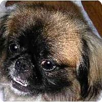 Adopt A Pet :: Cosmo - Mays Landing, NJ
