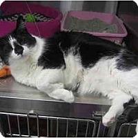 Adopt A Pet :: Piper - Greenville, SC