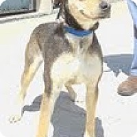 Adopt A Pet :: Clover (Reduced $300) - Staunton, VA