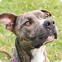 Adopt A Pet :: Kangry - Jupiter, FL