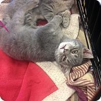 Adopt A Pet :: Quade - San Ramon, CA