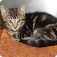 Adopt A Pet :: Radley - Arlington, VA