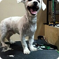 Adopt A Pet :: Icicle - Northumberland, ON