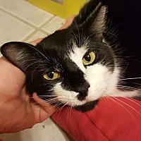 Adopt A Pet :: MARBLE - Burlington, NC