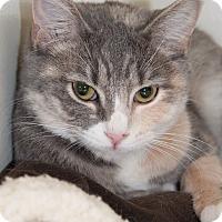 Adopt A Pet :: Maya - Georgetown, TX