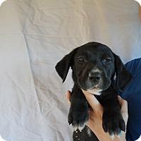 Adopt A Pet :: Basha - Oviedo, FL