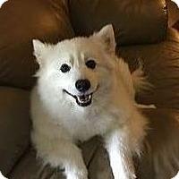 Adopt A Pet :: KOBY - St. Louis, MO