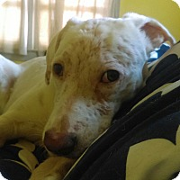 Adopt A Pet :: Athena~adopted! - Glastonbury, CT