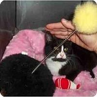 Adopt A Pet :: TUX - Little Neck, NY