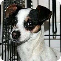 Adopt A Pet :: Carmen - Canoga Park, CA