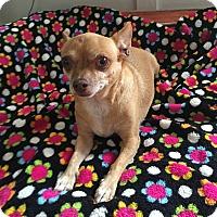 Adopt A Pet :: Diego - North Hollywood, CA