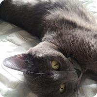 Adopt A Pet :: Pinot-dainty sweetheart - Los Angeles, CA