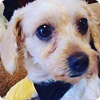 Adopt A Pet :: Gilda - Covina, CA