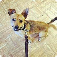 Adopt A Pet :: Chewey - Oak Park, IL