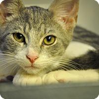 Adopt A Pet :: ANDREW (low adoption fee) - New Smyrna Beach, FL