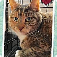 Adopt A Pet :: Waverly - Atco, NJ