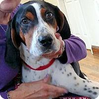 Adopt A Pet :: Chestnut - Lexington, MA