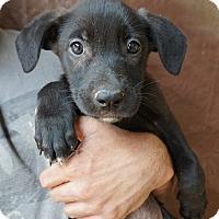 Adopt A Pet :: Happy - Oviedo, FL