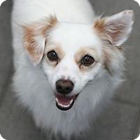 Adopt A Pet :: Chilly - Canoga Park, CA