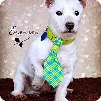 Adopt A Pet :: Bronson - Omaha, NE