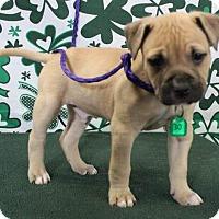 Adopt A Pet :: CLYDE - Gustine, CA