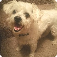 Adopt A Pet :: Sampson - Farmington, MN