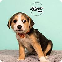 Adopt A Pet :: Kaimana - Cincinnati, OH
