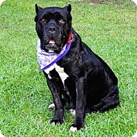 Adopt A Pet :: Evie - Norwood, GA