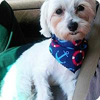 Adopt A Pet :: Darla - Lighthouse Point, FL