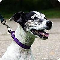 Adopt A Pet :: Gentle ELLIE luvs kids & dogs - Durham, NH