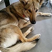 Adopt A Pet :: Lobo - Victorville, CA