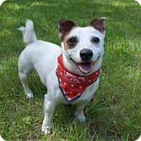 Adopt A Pet :: Curly - Mocksville, NC
