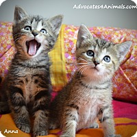 Adopt A Pet :: Anna & Andy - Xenia, OH
