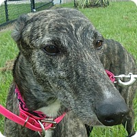 Adopt A Pet :: O Gassey Drive - Longwood, FL