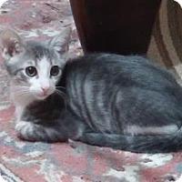 Adopt A Pet :: Jasper 2 - Bulverde, TX
