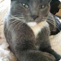 Adopt A Pet :: Aspen - Montello, WI