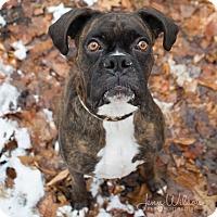 Adopt A Pet :: Glenn - Drumbo, ON