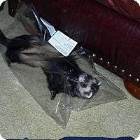 Adopt A Pet :: Atlas - Acworth, GA