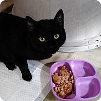 Adopt A Pet :: Tony - Wakinsville, GA