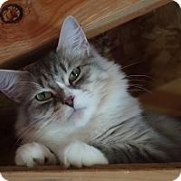 Adopt A Pet :: Hadley - Waller, TX