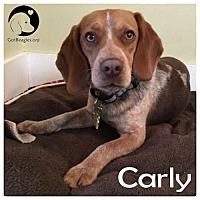 Adopt A Pet :: Carly - Novi, MI