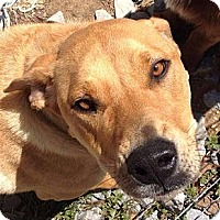 Adopt A Pet :: Bailey - Kittery, ME